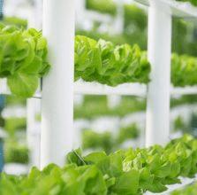 Green plants growing in a hi-tech setting Cornwall