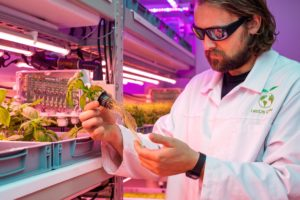 Scientist with lettuce plants